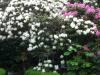 Garten Nordstrasse 16