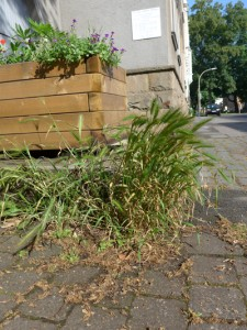 GetreidefeldNordstraße